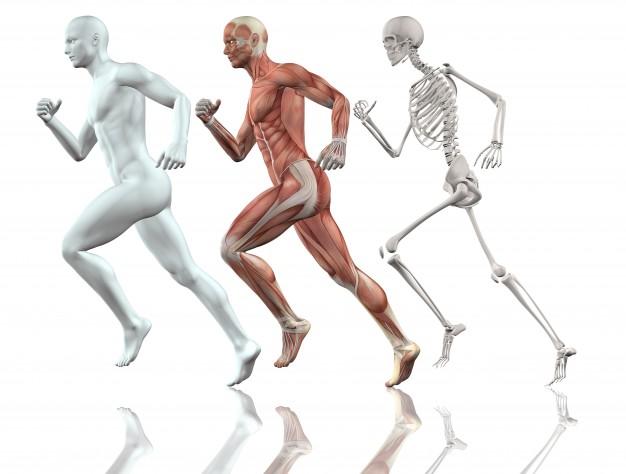 cuerpo humano corriendo 1048 4903 - Cuidemos nuestros huesos   Recomendación de Fundación Venezolana contra la Parálisis Infantil