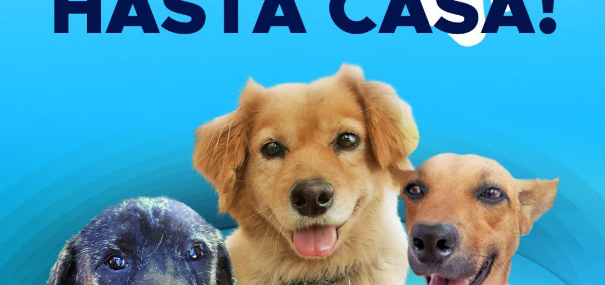 Blog sin logos 1200x565 - Estrenamos Instagram @PaticasFelices_Banplus para promover la adopción canina