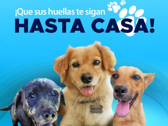 Blog sin logos 586x440 - ¡Celebramos la primera adopción canina canalizada a través de @PaticasFelices_Banplus!