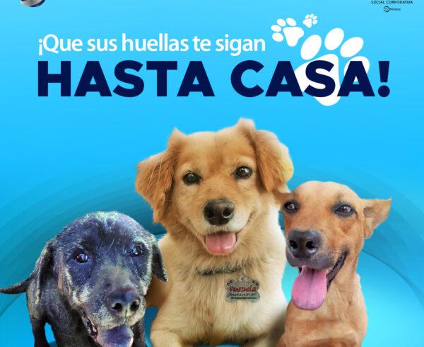Blog sin logos 600x490 - ¡Celebramos la primera adopción canina canalizada a través de @PaticasFelices_Banplus!