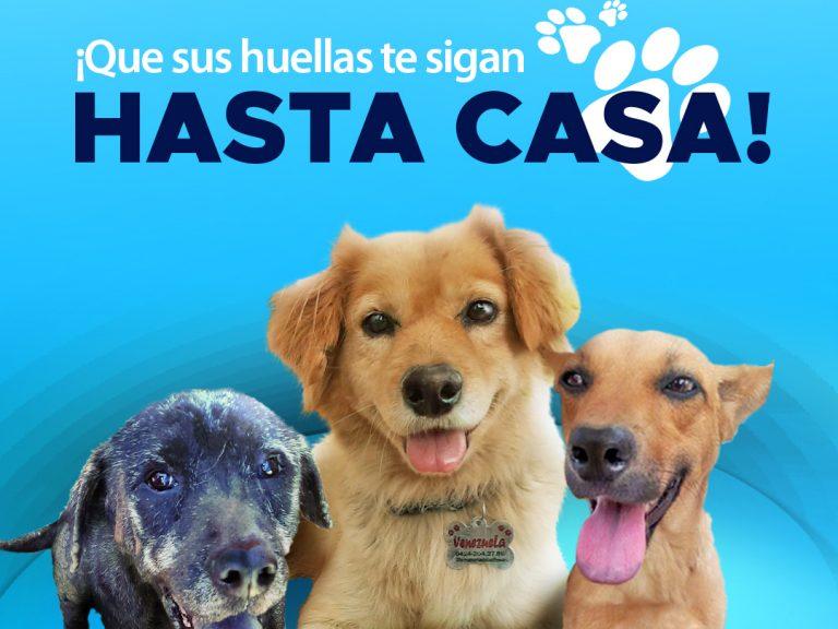 Blog sin logos 768x576 - Estrenamos Instagram @PaticasFelices_Banplus para promover la adopción canina