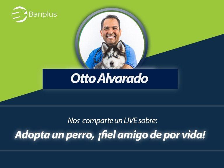 Foro en vivo con Otto veterinario 768x576 - ¡Anota en agenda! Domingo 02/08, 11:00 a.m. Foro en Vivo sobre la adopción canina | Con Otto Alvarado, médico veterinario