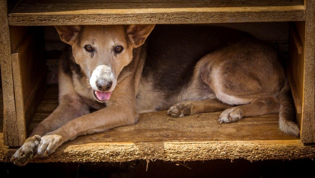 Santuario Luna 4 - Estrenamos Instagram @PaticasFelices_Banplus para promover la adopción canina