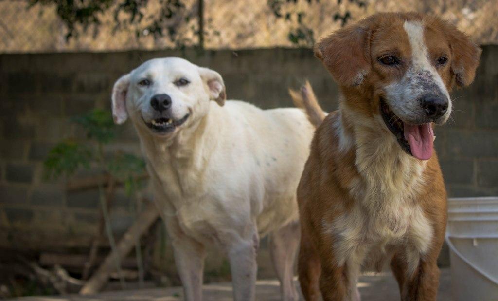 Santuario Luna 7 - Estrenamos Instagram @PaticasFelices_Banplus para promover la adopción canina