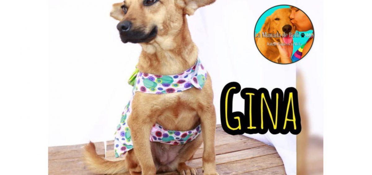 Gina Blog 1200x565 - Adopción canina | ¡Gina consiguió un hogar con ayuda de Ig Paticas Felices Banplus!