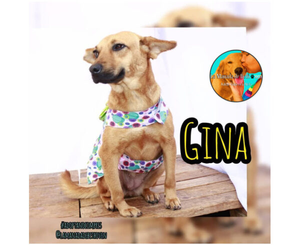 Gina Blog 600x490 - Adopción canina | ¡Gina consiguió un hogar con ayuda de Ig Paticas Felices Banplus!