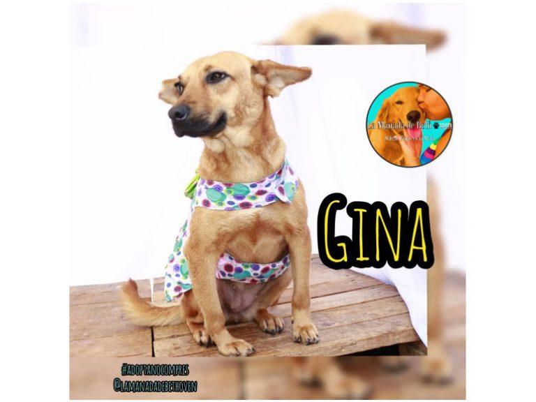 Gina Blog 768x576 - Adopción canina | ¡Gina consiguió un hogar con ayuda de Ig Paticas Felices Banplus!