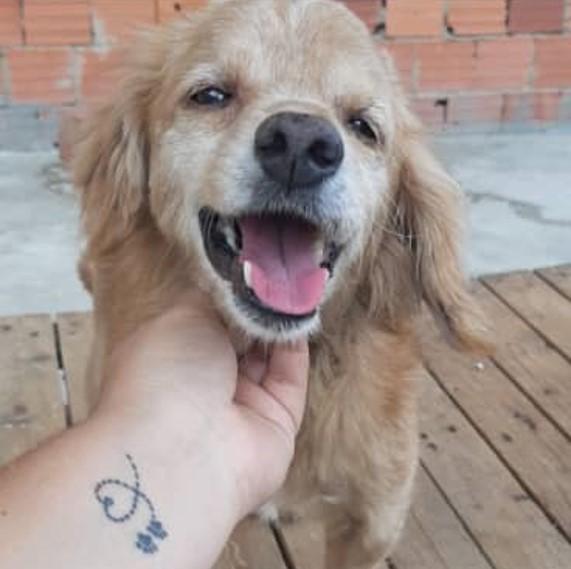 Odín - ¡Celebramos la primera adopción canina canalizada a través de @PaticasFelices_Banplus!