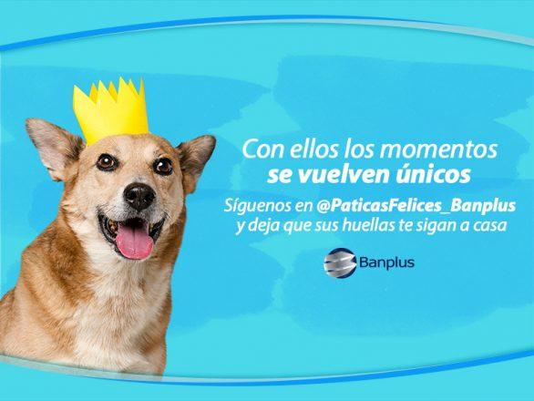 Blog � Patitas felices 586x440 - Día del Perro Mestizo   Paticas Felices: La verdadera amistad no se compra, se adopta