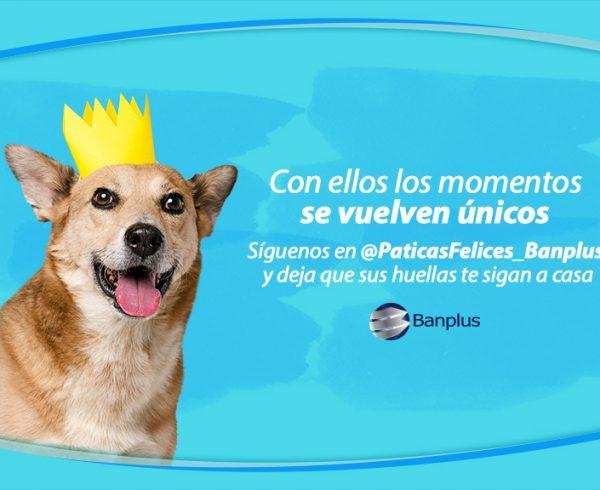 Blog � Patitas felices 600x490 - Día del Perro Mestizo | Paticas Felices: La verdadera amistad no se compra, se adopta