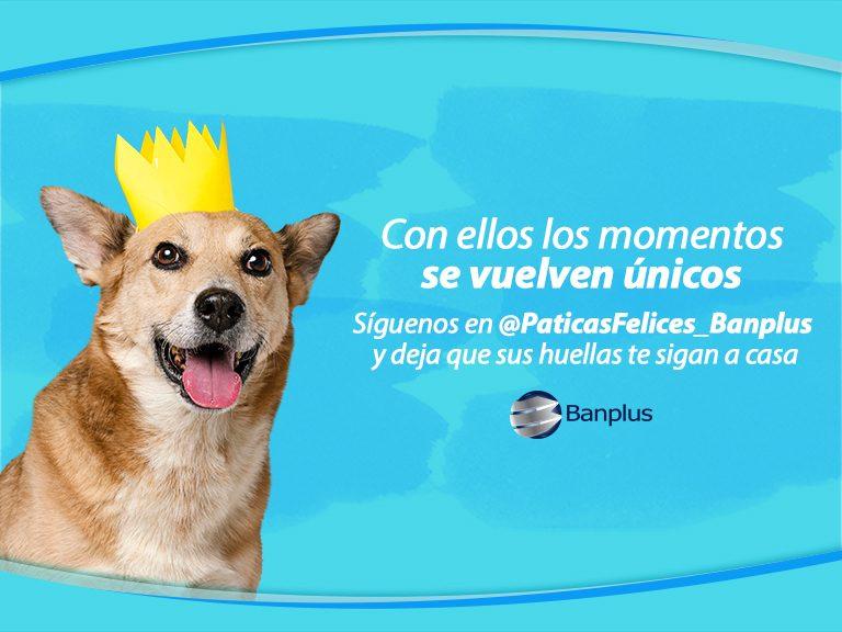 Blog � Patitas felices 768x576 - Día del Perro Mestizo | Paticas Felices: La verdadera amistad no se compra, se adopta
